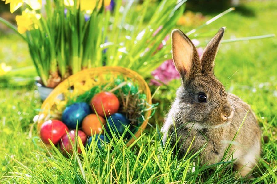 Quel est le nom du lapin de Pâques?